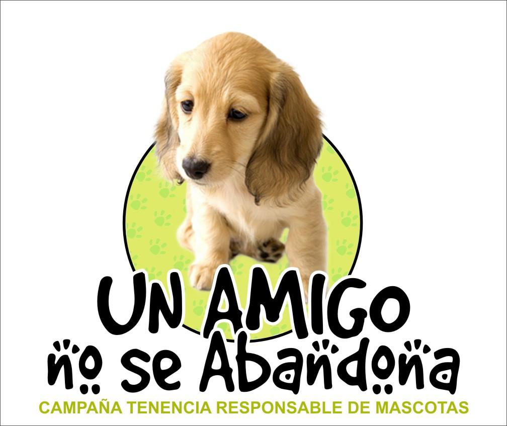 Resultado de imagen para tenencia responsable de mascotas